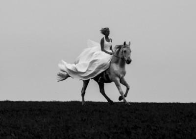 Pferd-2-2